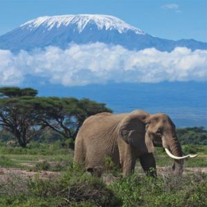 Photograph of an elephant